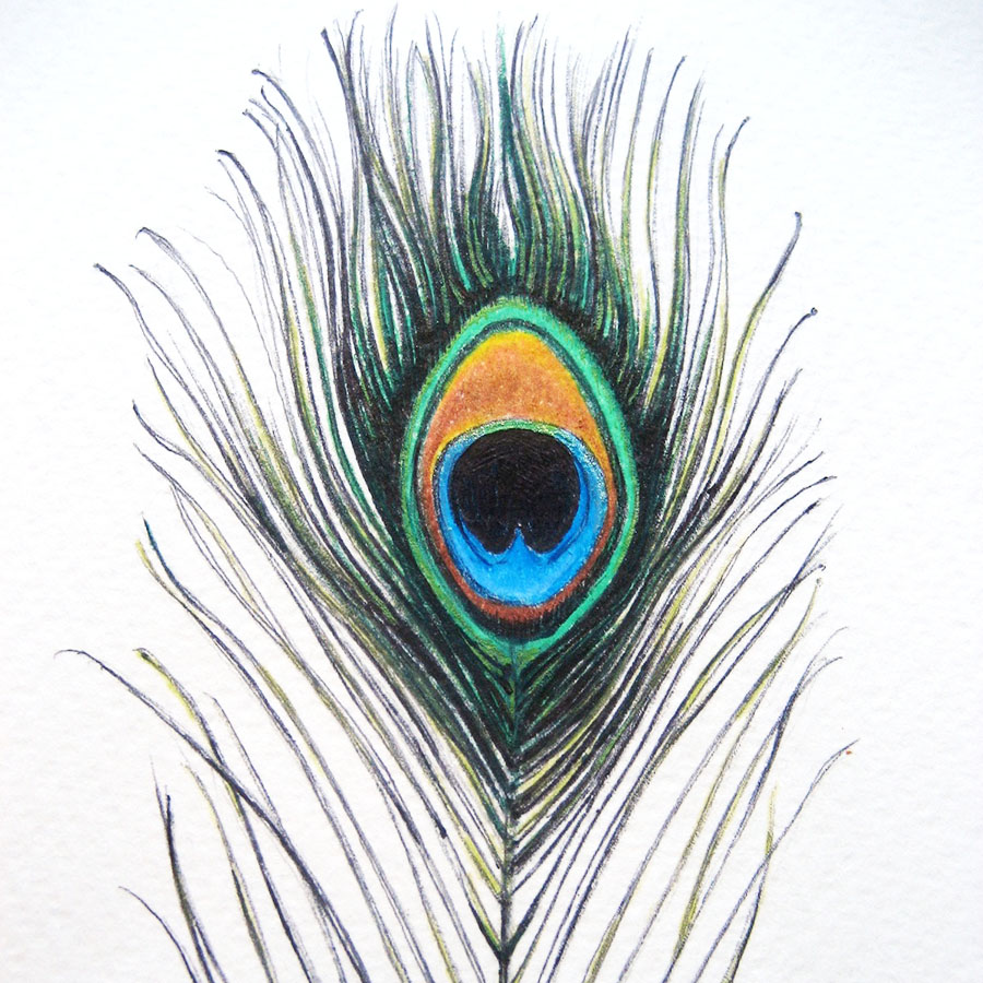Peacock Feathers For Embellishment Of Wedding Cards